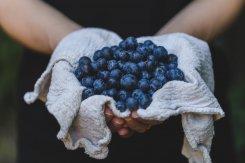 Les bleuets, de petites baies aux grandes vertus
